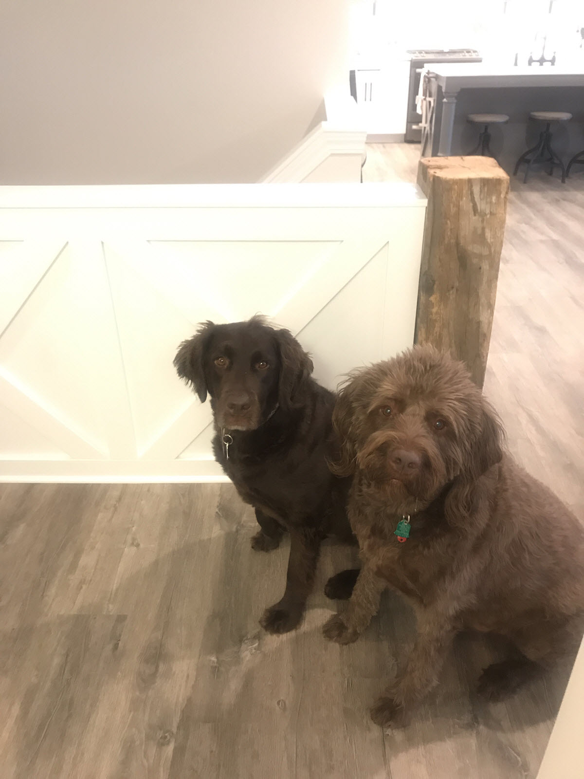 Pet Friendly Vinyl Plank Flooring