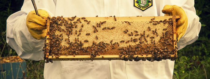 Mannington Flooring Sustainability Beekeeping